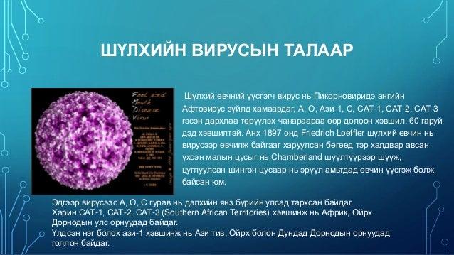 Мал амьтны гоц халдварт өвчин /Animal infectious diseases/ Slide 3