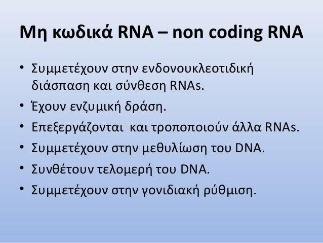 Μη κωδικά RNA – non coding RNA • Συμμετέχουν στην ενδονουκλεοτιδική διάσπαση και σύνθεση RNAs. • Έχουν ενζυμική δράση. • Ε...