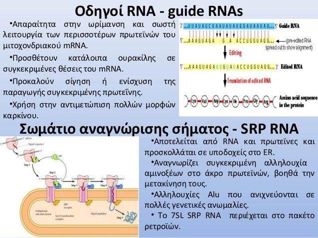 Οδηγοί RNA - guide RNAs •Απαραίτητα στην ωρίμανση και σωστή λειτουργία των περισσοτέρων πρωτεϊνών του μιτοχονδριακού mRNA....