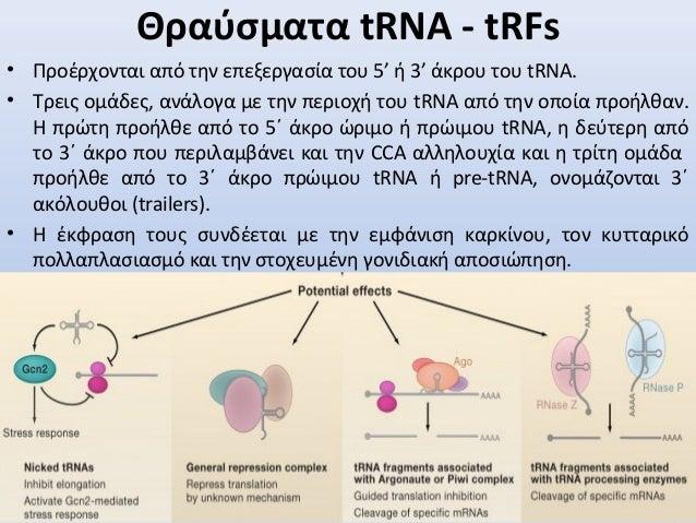 • Προέρχονται από την επεξεργασία του 5' ή 3' άκρου του tRNA. • Τρεις ομάδες, ανάλογα με την περιοχή του tRNA από την οποί...