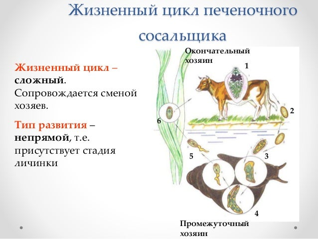 ВсёТВ Звезда Телепрограмма фильмов