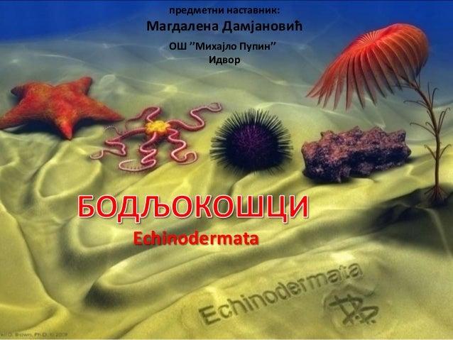 Echinodermata OШ ''Михајло Пупин'' Идвор предметни наставник: Магдалена Дамјановић