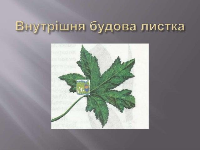 Завдання  1. Визначте у рослин тип листка (простий чи складний)  2. Наявність черешка  3. Тип листкової пластинки (суці...