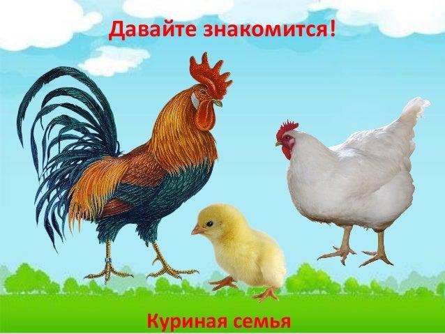 Цыпленок из яйца картинка