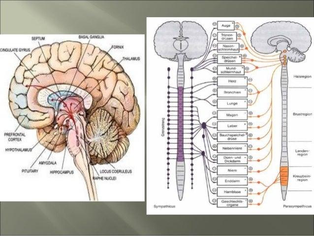 Невроните се основни единици во градбата на нервниот систем. Нервните кетки се одговорни и за спроведување на електро хеми...