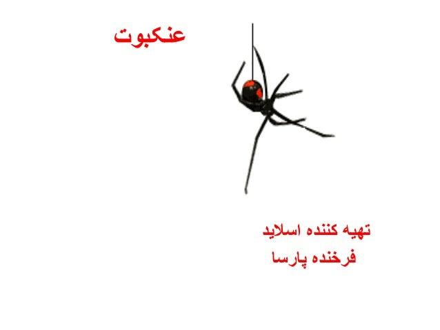 عنکبوت اسالید کننده تهیه پارسا فرخنده