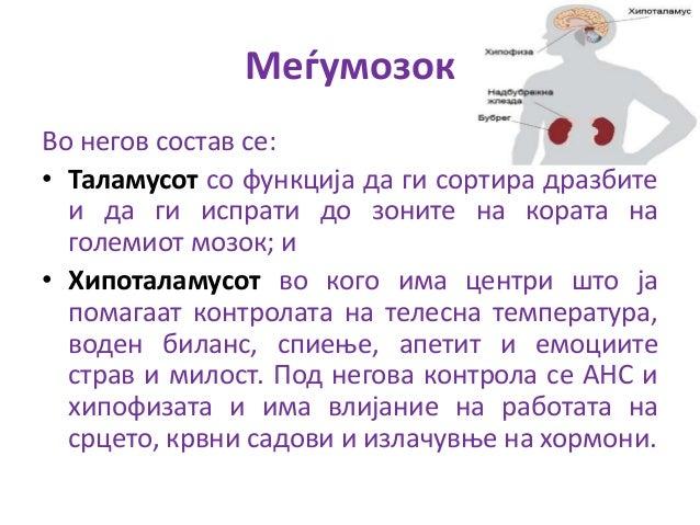 Автономен- Вегетативен нервен систем (симпатичен и парасимпатичен дел)