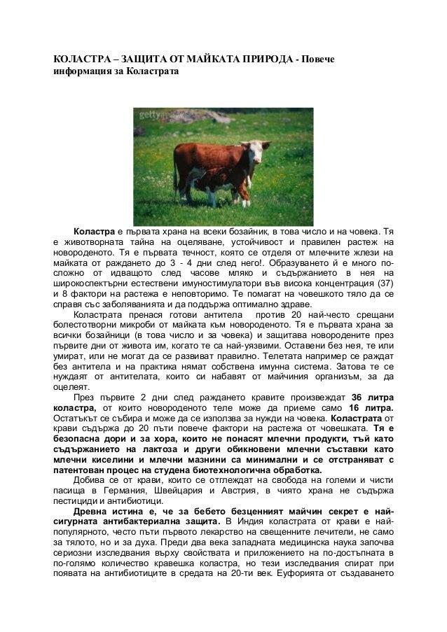 КОЛАСТРА – ЗАЩИТА ОТ МАЙКАТА ПРИРОДА - Повече информация за Коластрата Коластра е първата храна на всеки бозайник, в това ...
