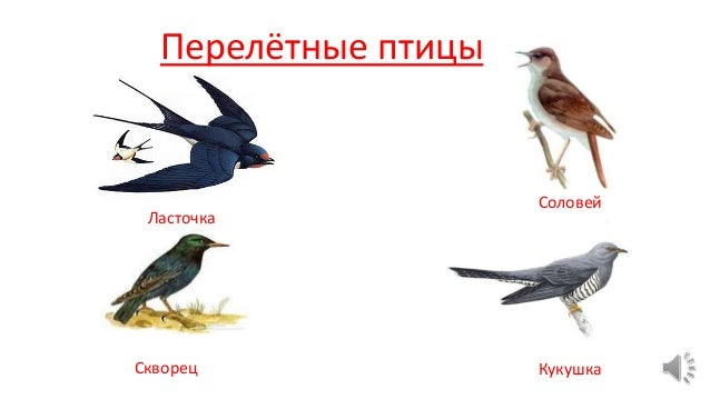 картинки для детей перелётные птицы