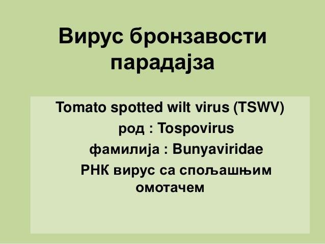 Вирус бронзавости парадајза Tomato spotted wilt virus (TSWV) род : Tospovirus фамилија : Bunyaviridae РНК вирус са спољашњ...