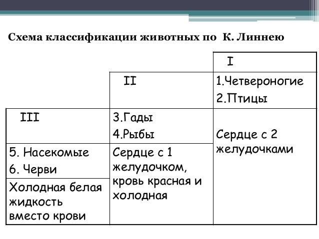 Торговая классификация схема