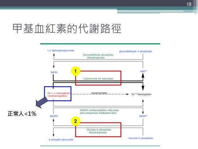 甲基血紅素的代謝路徑 18 正常人<1% 1 2