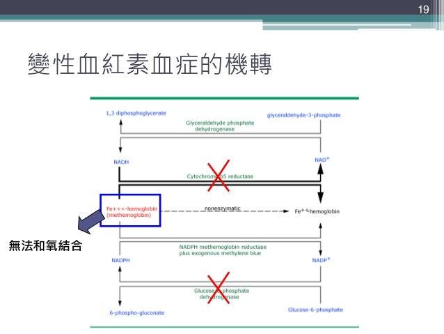 變性血紅素血症的機轉 19 無法和氧結合