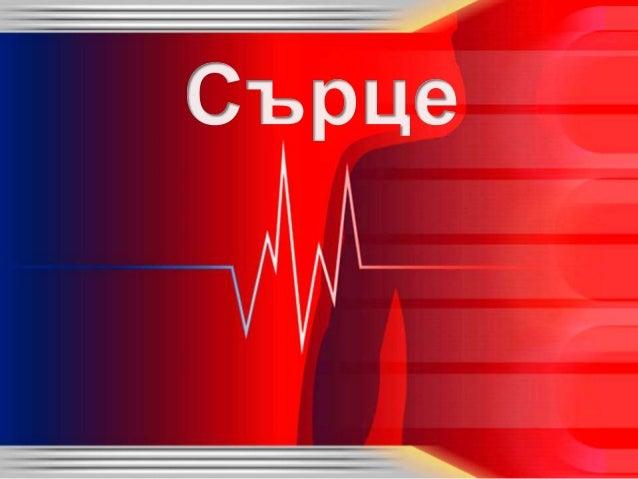 • Сърцето е кух мускулест орган. • Намира се в гръдния кош,между белите дробове. • По средата има преграда, която го разде...