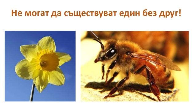 Пчелен кошер Slide 2