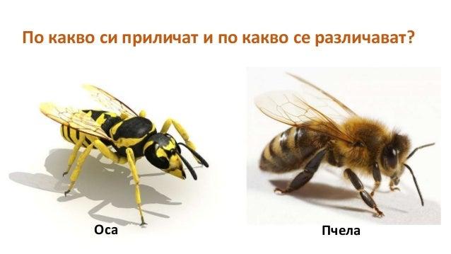 Пчелен кошер Slide 3