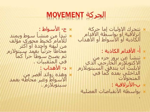 الحركةMOVEMENT ج-األسواط: ويمتد سوط منشأ من تبدأ لألماممؤلف محوري كخيط منليفةأكثر أو وا...