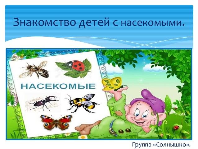 с знакомство насекомые