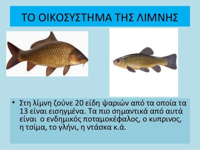 Ψάρια σε λίμνη που χρονολογείται