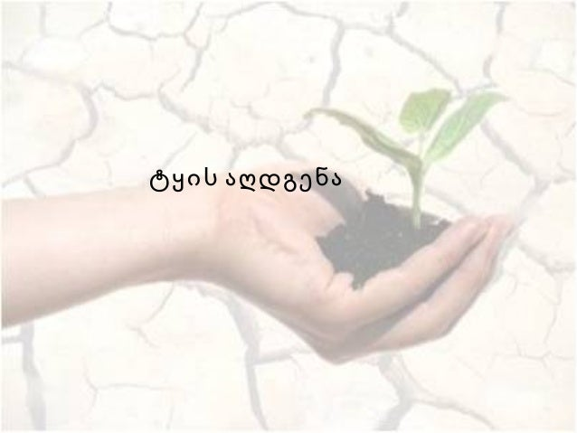 ტყის აღდგენა