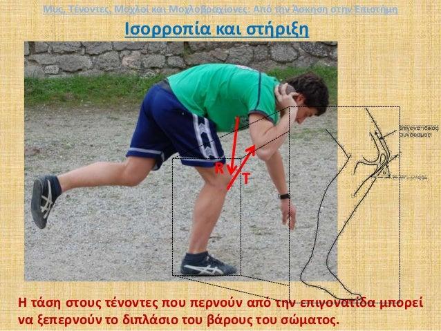 Ισορροπία και στήριξη R Τ Η τάση στους τένοντες που περνούν από την επιγονατίδα μπορεί να ξεπερνούν το διπλάσιο του βάρους...