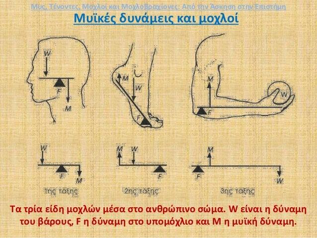 Μυϊκές δυνάμεις και μοχλοί Τα τρία είδη μοχλών μέσα στο ανθρώπινο σώμα. W είναι η δύναμη του βάρους, F η δύναμη στο υπομόχ...