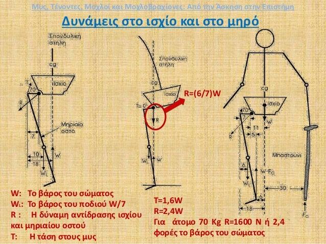 Δυνάμεις στο ισχίο και στο μηρό Τ=1,6W R=2,4W Για άτομο 70 Kg R=1600 Ν ή 2,4 φορές το βάρος του σώματος W: Το βάρος του σώ...