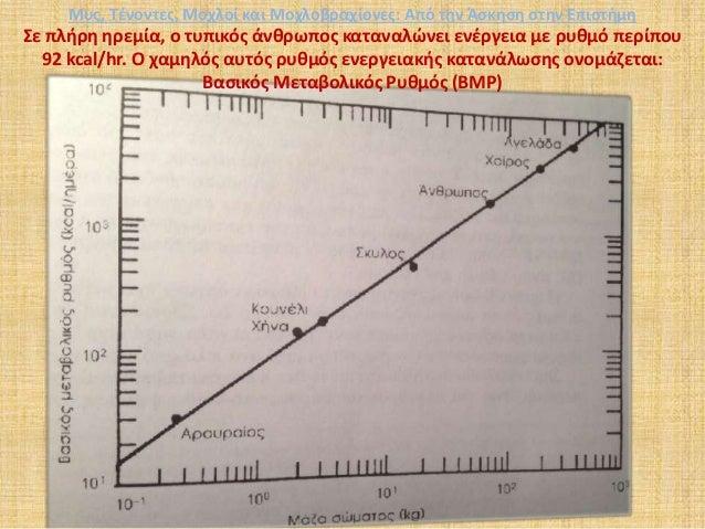 Σε πλήρη ηρεμία, ο τυπικός άνθρωπος καταναλώνει ενέργεια με ρυθμό περίπου 92 kcal/hr. Ο χαμηλός αυτός ρυθμός ενεργειακής κ...