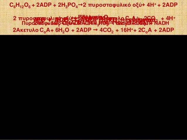 ATP + H2O  ADP H3PO4 + ενέργειαPC + ADP  ATP + H3PO4 + ενέργεια C6H12O6 + 2ADP + 2H3PO42 πυροσταφυλικό οξύ+ 4Η+ + 2ADP ...