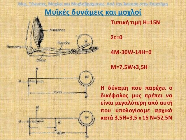 Μυϊκές δυνάμεις και μοχλοί Τυπική τιμή Η=15Ν Στ=0 4Μ-30W-14Η=0 M=7,5W+3,5Η Η δύναμη που παρέχει ο δικέφαλος μυς πρέπει να ...