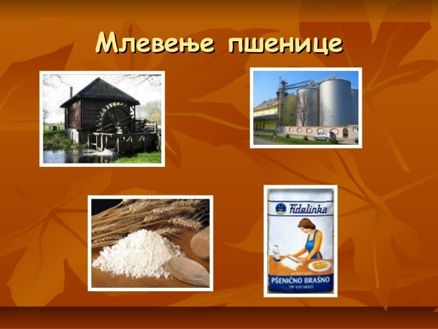 Млевење пшеницеМлевење пшенице