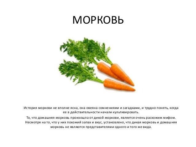 МОРКОВЬ История моркови не вполне ясна, она овеяна сомнениями и загадками, и трудно понять, когда ее в действительности на...