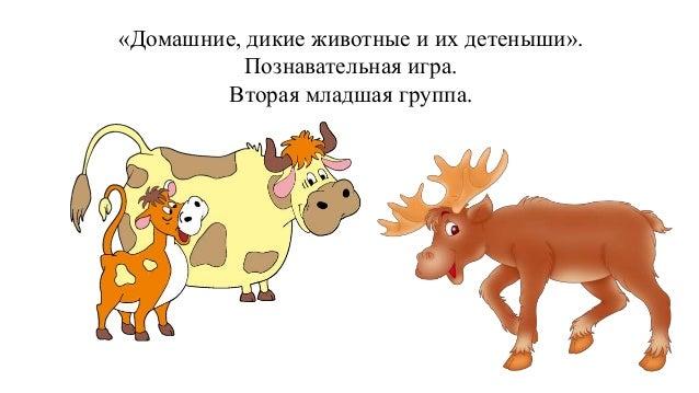 Дикие и домашние животные детский сад картинки 10