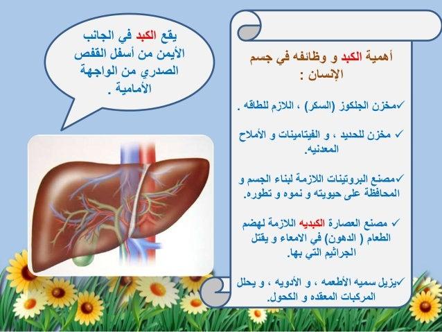 تضاعف فيروس التهاب الكبد الوبائي -ب-