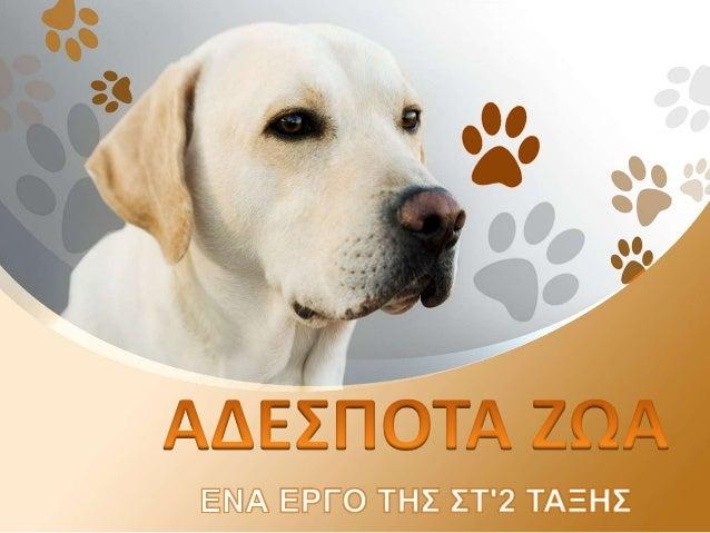 Τα αδέσποτα ζώα είναι κάποια ζώα (σκυλιά , γάτες), που είναι παρατημένα από τα αφεντικά τους. Αυτά τα ζώα περιπλανιούνται ...