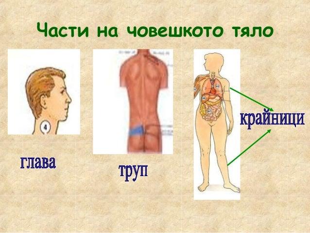 Човек започва да опознава света от деня на своето раждане. Това става чрез неговите сетивни органи.