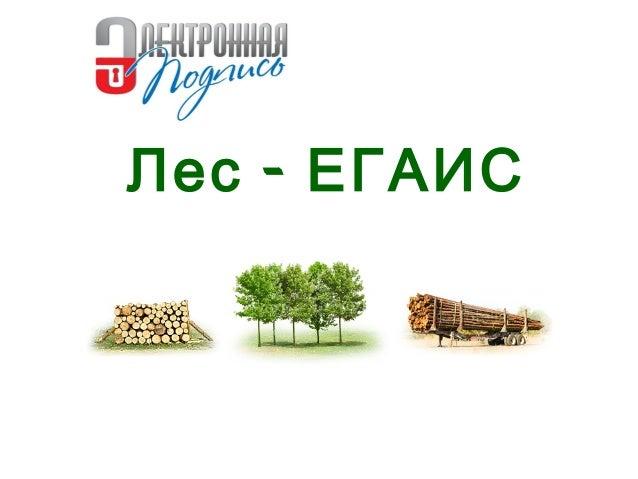 скачать программу егаис лес бесплатно - фото 2