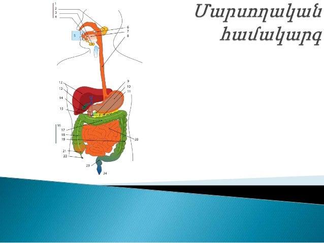  Մարսողական համակարգի սկզբնամասը բերանի խոռոչն է, որտեղ կատարվում է սննդի մեխանիկական և քիմիական մշակում։ Մեխանիկական մշա...