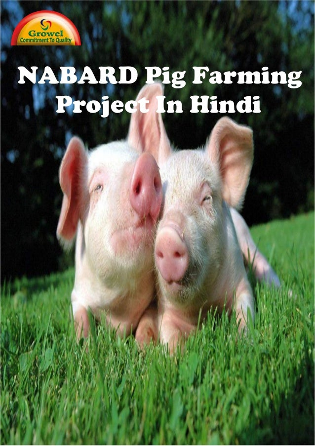 NABARD Pig Farming Project In Hindi