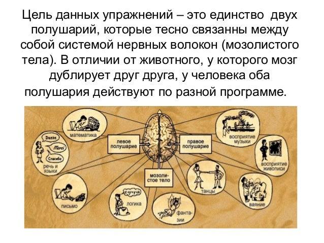 Цель данных упражнений – это единство двух полушарий, которые тесно связанны между собой системой нервных волокон (мозолис...