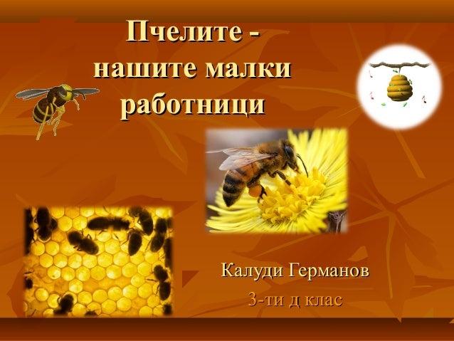 Пчелите -Пчелите - нашите малкинашите малки работнициработници Калуди ГермановКалуди Германов 3-ти д клас3-ти д клас