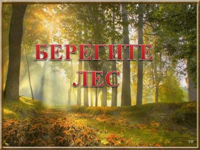  Познакомить с правилами поведения в лесу;  Воспитывать любовь к окружающему миру, к родному краю;  Воспитывать чувство...