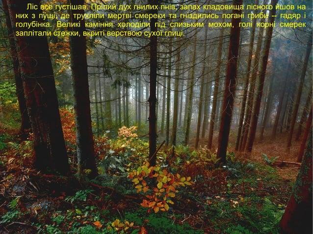 Ліс все густішав. Прілий дух гнилих пнів, запах кладовища лісного йшов на них з пущі, де трухліли мертві смереки та гнізди...