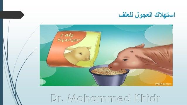 للعلف العجول استهالك Dr. Mohammed Khidr