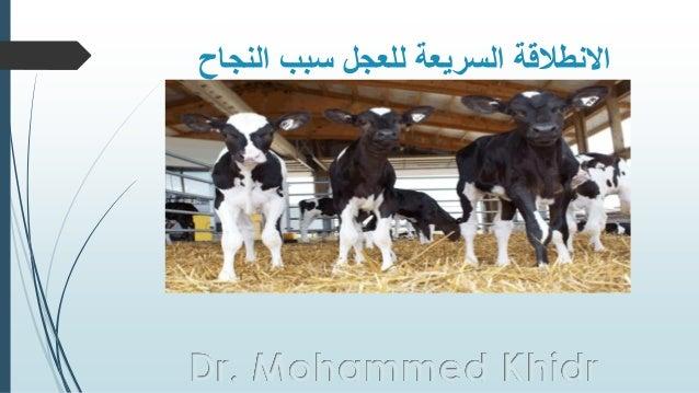 النجاح سبب للعجل السريعة االنطالقة Dr. Mohammed Khidr