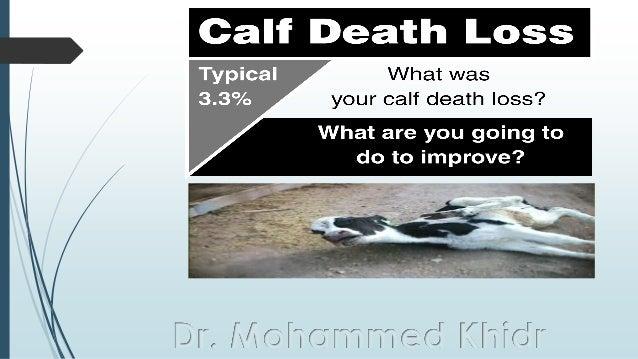 Dr. Mohammed Khidr