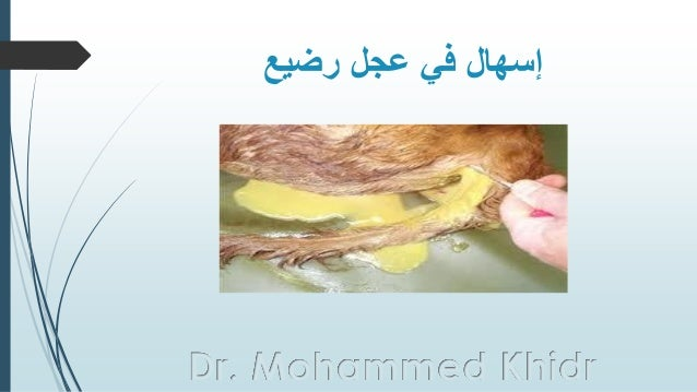 رضيع عجل في إسهال Dr. Mohammed Khidr