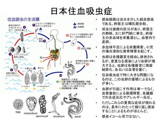 日本住血吸虫症 • 感染経路は淡水を介した経皮感染 である。終宿主は哺乳類全般。 • 成虫は雄雌の区分があり、終宿主 の静脈、主に肝門脈に寄生。終宿 主の赤血球を栄養源とし、血管内で 産卵。 • 赤血球不足による栄養障害。小児 の場合深刻な発育...
