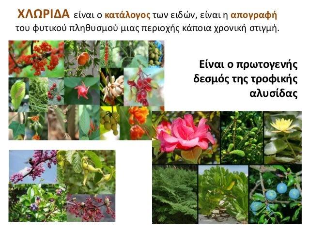 ΧΛΩΡΙΔΑ είναι ο κατάλογος των ειδών, είναι η απογραφή του φυτικού πληθυσμού μιας περιοχής κάποια χρονική στιγμή. Είναι ο π...
