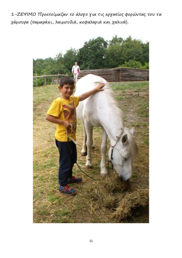 11 1-ΖΕΨΙΜΟ Προετοίμαζαν το άλογο για τις εργασίες φορώντας του τα χάμουρα (σαμαράκι, λαιμουδιά, κεφαλαριά και χαλινά).
